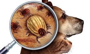 middelen tegen oorontsteking hond