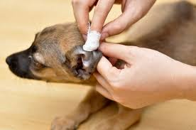 oorsmeer hond symptomen