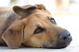 tips oormijt hond